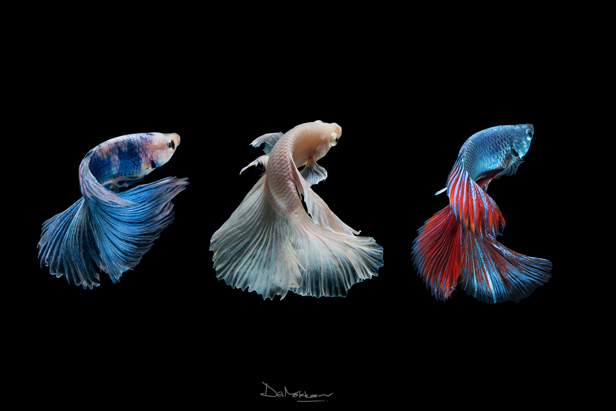 Three fish representing something surreal